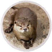 Cute Otter Portrait Round Beach Towel