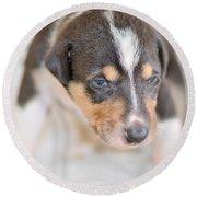 Cute Smooth Collie Puppy Round Beach Towel