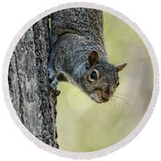 Cute Squirrel  Dare Me Round Beach Towel