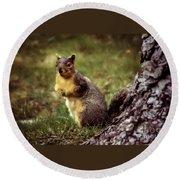 Cute Squirrel Round Beach Towel by Robert Bales