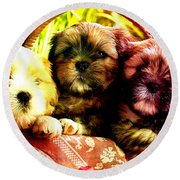 Cute Terrier Puppies Round Beach Towel by Marvin Blaine