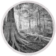Cypress Roots In Big Cypress Round Beach Towel