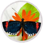 Cythera Butterfly Round Beach Towel