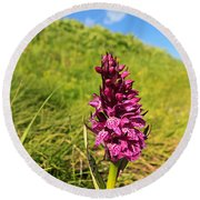 Dactylorhiza Orchid Round Beach Towel