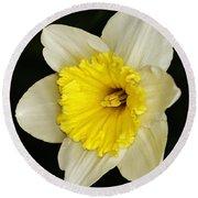 Daffodil 2014 Round Beach Towel
