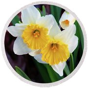 Daffodil Art  Round Beach Towel