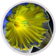 Daffodil Dreams - Photopower 1907 Round Beach Towel