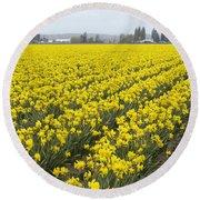 Daffodil Field Round Beach Towel