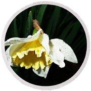 Daffodil In The Rain 2 Round Beach Towel