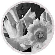 Daffodil Monochrome Study Round Beach Towel
