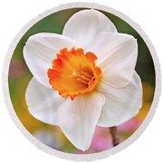 Daffodil  Round Beach Towel by Rona Black