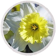 Daffodil Sunshine Round Beach Towel