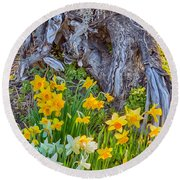 Daffodils And Sculpture Round Beach Towel