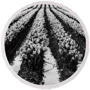 Daffodils Forever Round Beach Towel