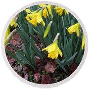 Daffodils In The Rain  Round Beach Towel
