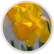 Daffodils In The Setting Sun Round Beach Towel