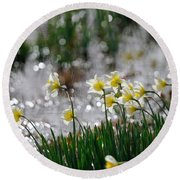 Daffodils On The Shore Round Beach Towel