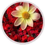 Dahlia And Kalanchoe Round Beach Towel