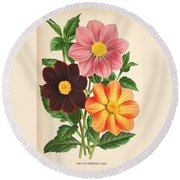 Dahlia Coccinea From A Begian Book Of Flora. Round Beach Towel