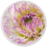 Dahlia Delight Square  Round Beach Towel