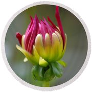 Dahlia Flower Bud Round Beach Towel