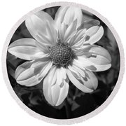 Dahlia Named Alpen Cherub Round Beach Towel