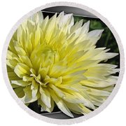 Dahlia Named Canary Fubuki Round Beach Towel
