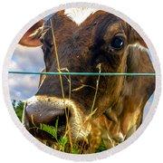 Dairy Cow Round Beach Towel