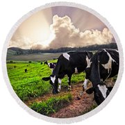 Dairy Cows At Sunset Round Beach Towel