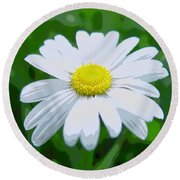 Daisey Flower - Looks Like A Painting Round Beach Towel