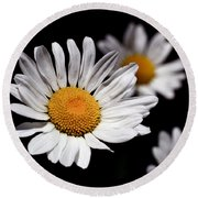 Daisies Round Beach Towel by Rona Black