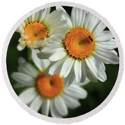 Daisy And Friend Round Beach Towel