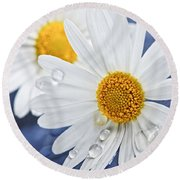 Daisy Flowers With Water Drops Round Beach Towel by Elena Elisseeva