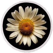 Daisy On Black Square Round Beach Towel