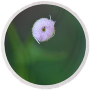 Daisy Weed Bud Series Photo C Round Beach Towel