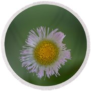 Daisy Weed Series Photo A Round Beach Towel