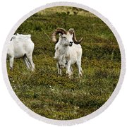 Dall Rams On Alert Round Beach Towel