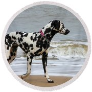 Dalmatian By The Sea Round Beach Towel
