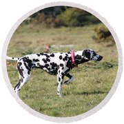 Dalmation Pretending To Be A Pointer Round Beach Towel