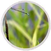 Damselfly Courting Round Beach Towel