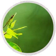 Damselfly Round Beach Towel