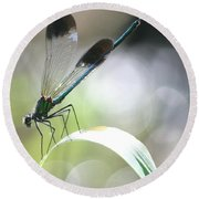 Damselfly On Little River  Round Beach Towel