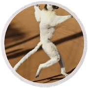 Dancing Sifaka 2 Round Beach Towel