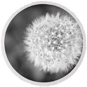 Dandelion 2 In Black And White Round Beach Towel
