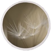 Dandelion Close-up View Backlit Round Beach Towel