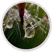 Dandelion Droplets Round Beach Towel