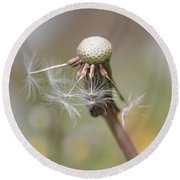 Dandelion Last To Fly Away Round Beach Towel