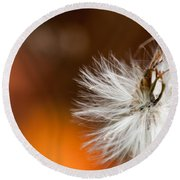 Dandelion Seed Head And Fall Color Background Round Beach Towel