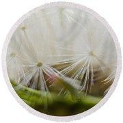 Dandelion Seed Head Macro IIi Round Beach Towel
