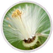Dandelion Seed Head  Round Beach Towel
